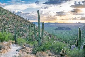 Cactus next to Hiking Trail - Mescaline